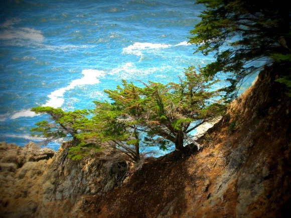 Tree in McWay Cove, Big Sur, California