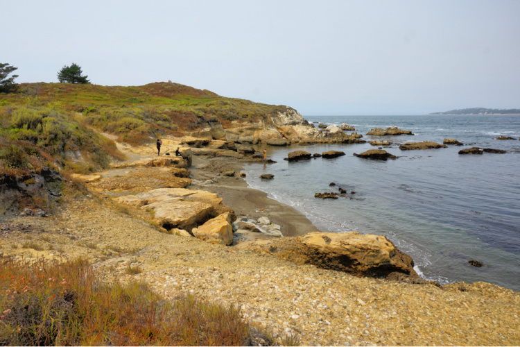 Moss Cove in Point Lobos State Reserve