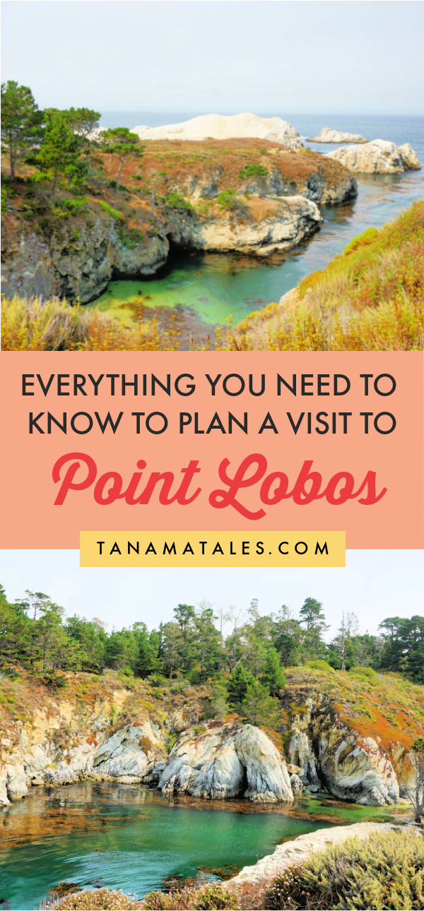 Everything you need to know to plan a visit to Point Lobos State Reserve | California | Things to do in Carmel | Things to Do in Monterey | Things to Do in Big Sur | Big Sur Road Trip | Pacific Coast Highway Road Trip | California Road Trip | China Cove | Sea Lion Point | Whaler's Cove | Point Lobos Photography | Carmel Itinerary | Carmel Weekend | Carmel Beaches | Carmel Cottages | Carmel Scenic Road