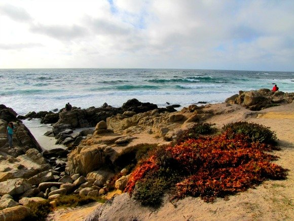 Bird Rock Area, 17 Mile Drive, Monterey, California