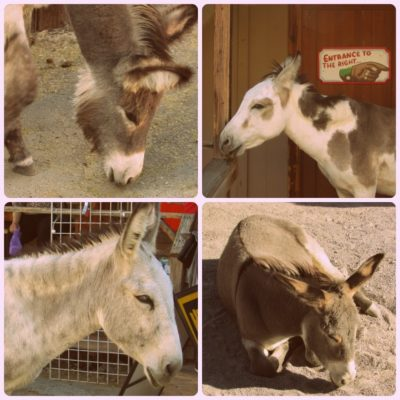 Oatman: The Town Owned by Burros