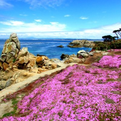Lovers Point and the Carpet of Flowers