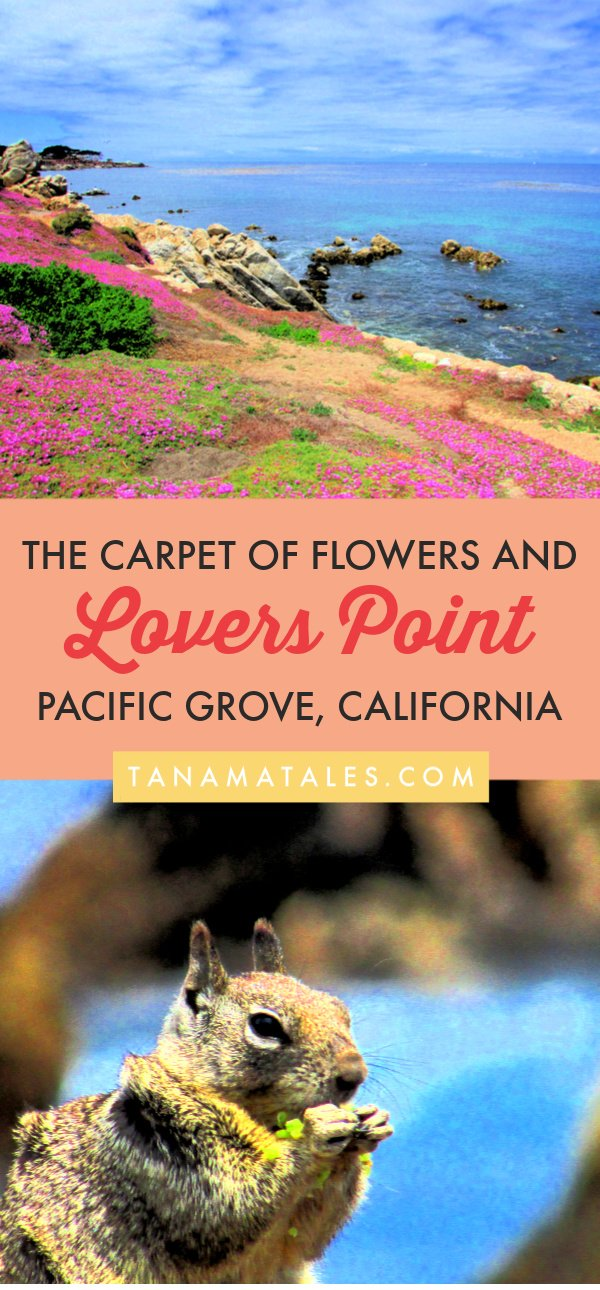 Things to do in Pacific Grove, #California – Travel tips and ideas - Pacific Grove, a city sandwiched between Pebble Beach and #Monterey, has within its limits marvelous coastal scenes. Check out my article to learn more about Lovers Point and the carpet of flowers. #beachtown #roadtrip #PCH