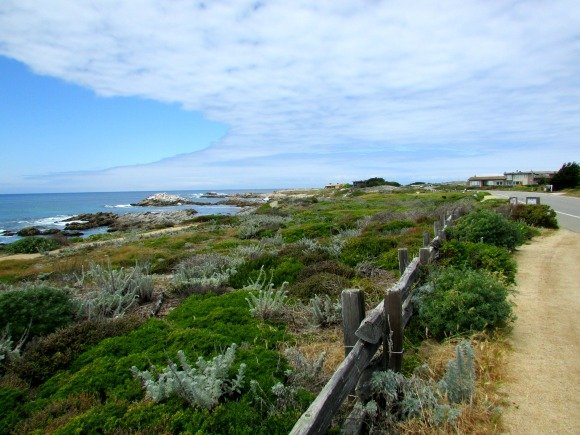 Asilomar State Beach, Pacific Grove, California