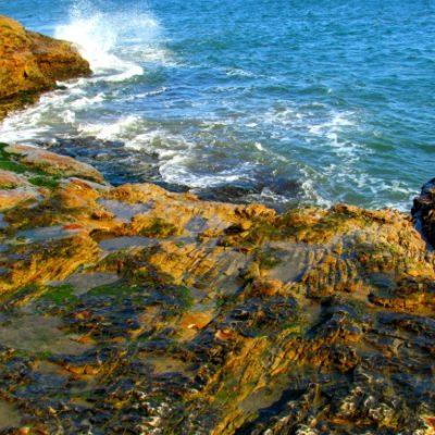 Natural Bridges State Beach in Santa Cruz