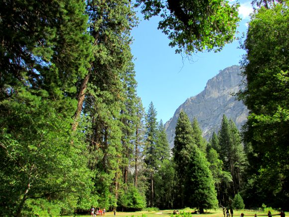 The Ahwahnee Meadows, Yosemite National Park, California