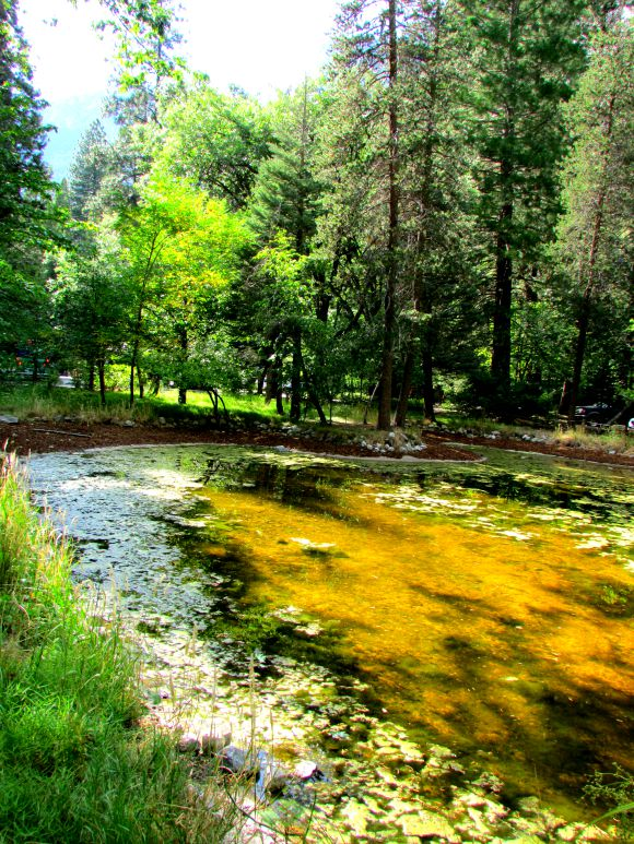 Pond in front of The Ahwahnee Meadows, Yosemite National Park, California