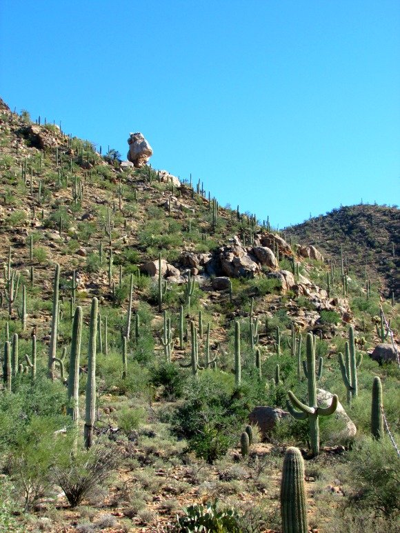 Saguaro National Park, Tucson, Arizona