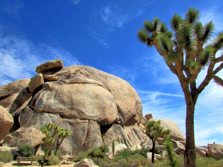 Cap Rock, Things to Do in Joshua Tree National Park, California