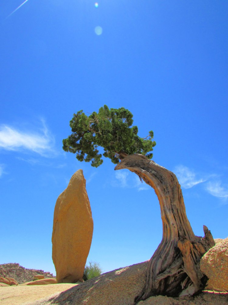 Juniper and Tree, Things to Do in Joshua Tree National Park, California