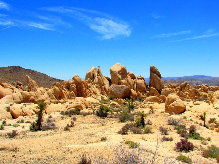 Things to Do in Joshua Tree National Park, California