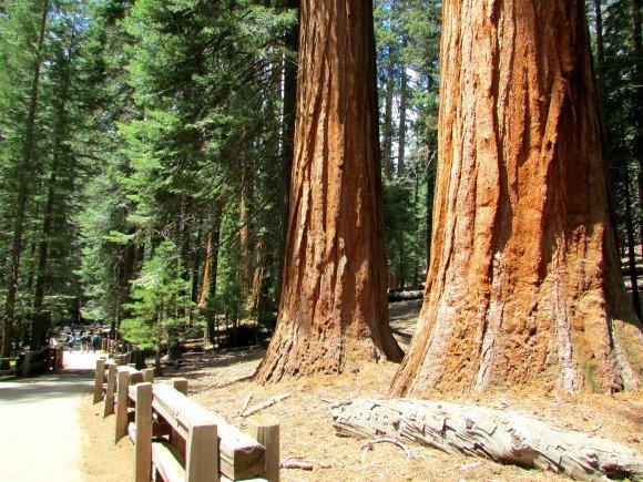 General Sherman Trail, Sequoia National Park, California
