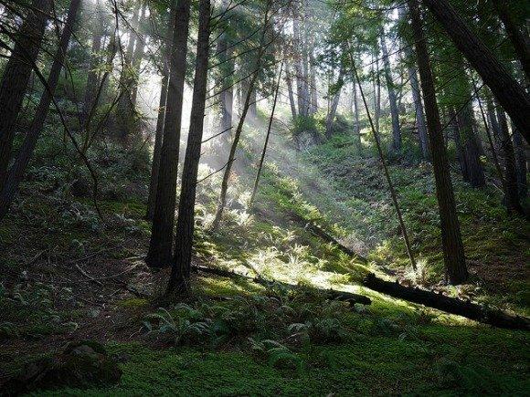 Ewoldsen Trail in Julia Pfeiffer Burns State Park