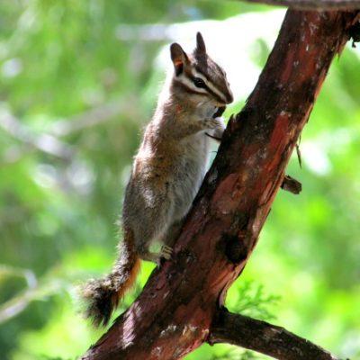 Sequoia National Park: Tokopah Falls
