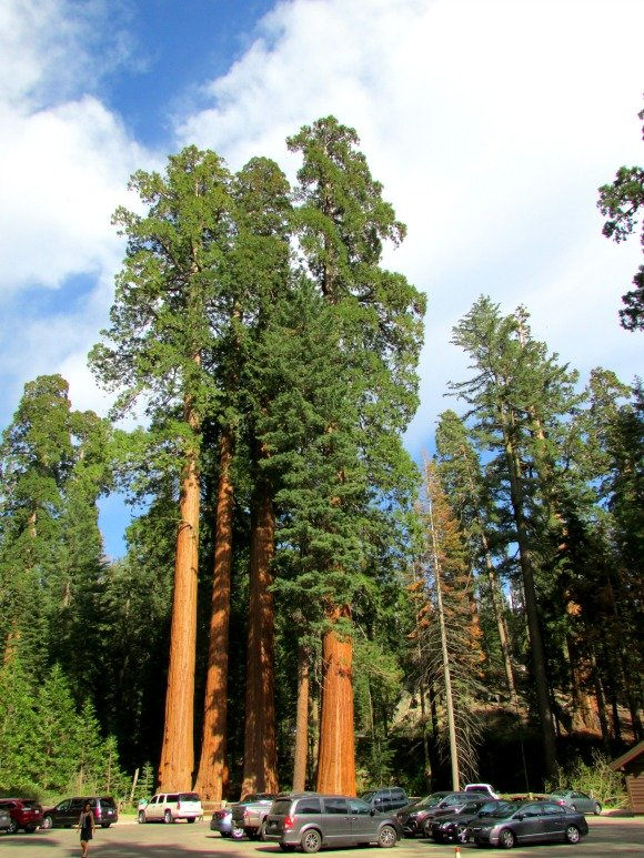 General Grant Grove, Kings Canyon National Park, California