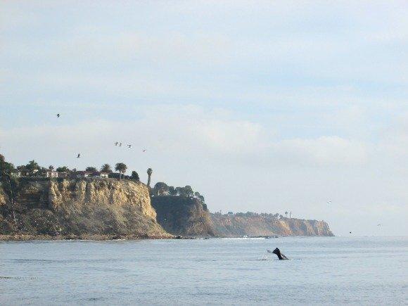 Whale Watching, Redondo Beach, California