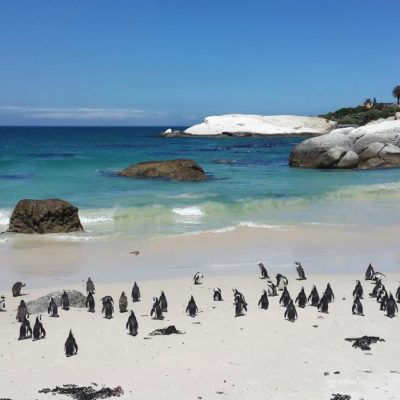 "A ""Must-See"" Guide to Cape Town, South Africa"