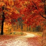 Autumn in New England – An Explosion of Color and Culture