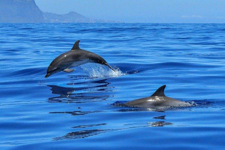 Exmouth, Dolphins, Western Australia Destinations