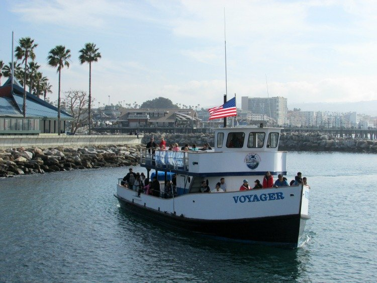 Things to do in the South Bay Los Angeles, Redondo Beach Whale Watching