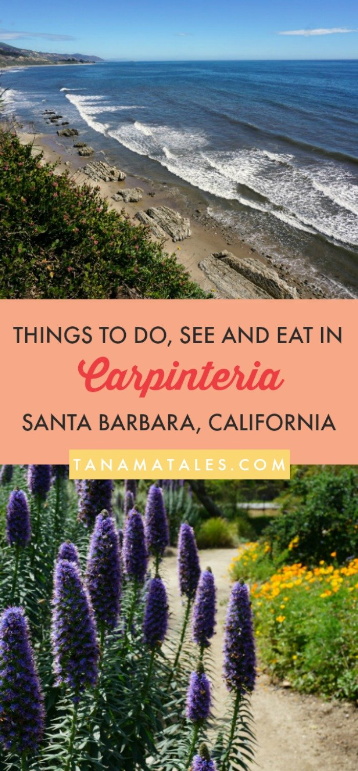 Things to do in #Carpinteria, Santa Barbara County – Travel tips and ideas – Carpinteria is a peaceful beach community with many nearby natural attractions (seal and sea lion rookery, bluffs, tide pools full starfish, anemones and urchins). In addition, there are beaches, camping and water activities. This guide will give you plenty of ideas on what to see, do and eat in this beautiful beach town! #SantaBarbara #California #US