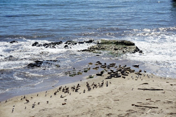 Things to do in Carpinteria, Carpinteria Bluffs Preserve, Seal Rookery,