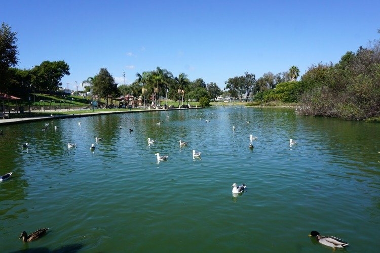 Pond at Polliwog Park, Manhattan Beach, California