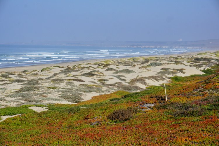 Surf Beach in Lompoc, California