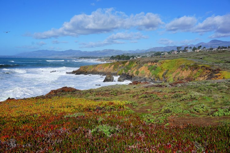 Cove at Fiscalini Ranch Preserve, Cambria, California, Things to to in Cambria