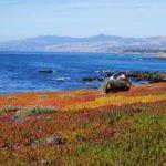 Ocean views at the Fiscalini Ranch Preserve, Cambria, California