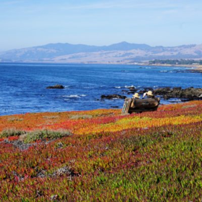 Cambria, California: Things to Do, See and Eat