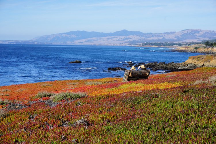Ocean views at the Fiscalini Ranch Preserve, Cambria, California