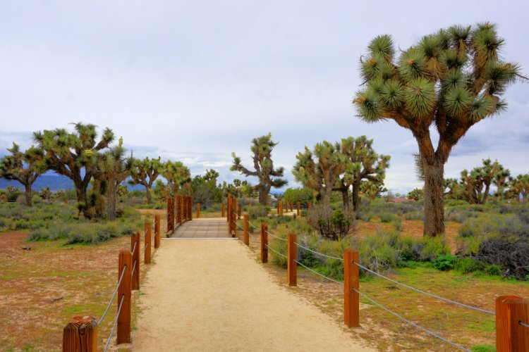 Joshua Trees and trails at the Prime Desert Woodland Reserve, Lancaster, California