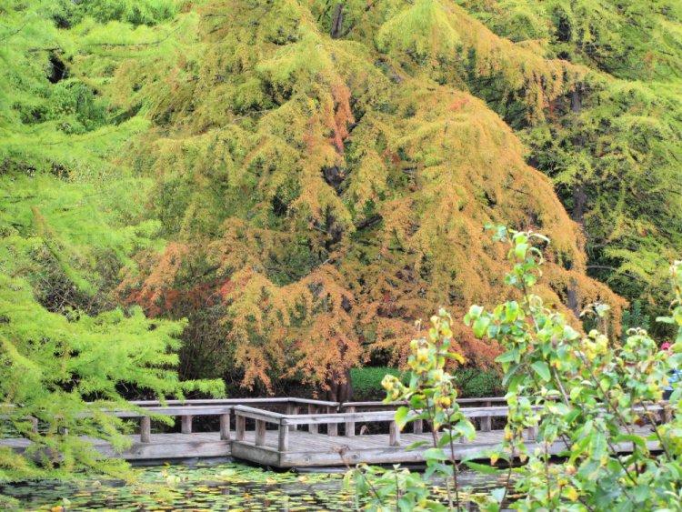 VanDusen Botanical Garden, Vancouver, Canada