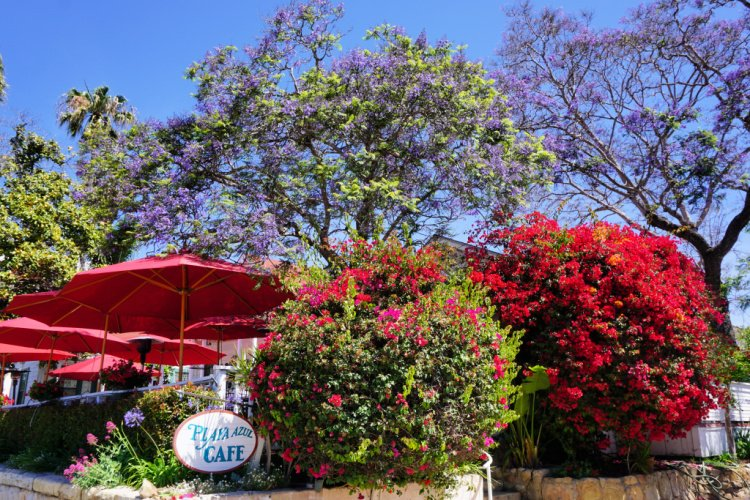 Cafe surrounded by flowers, Santa Barbara, California