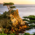 Planning a Trip to California, Lone Cypress at 17-mile Drive, Monterey