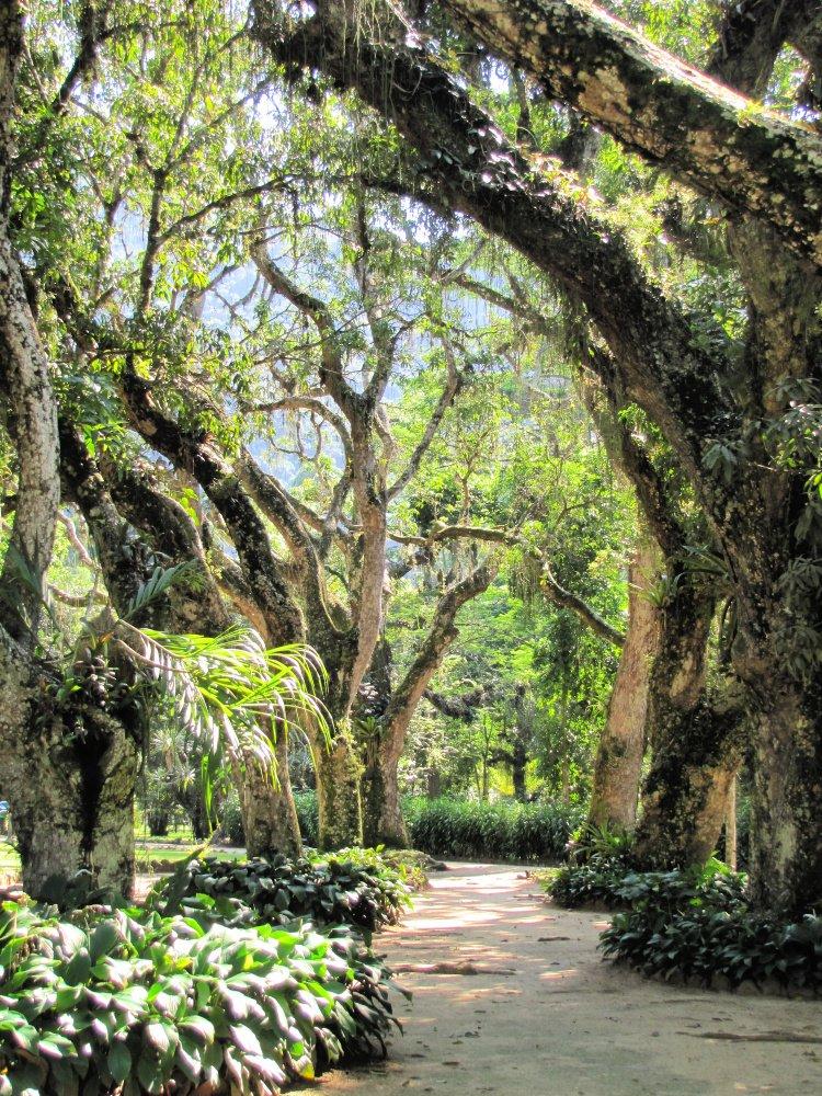 Trees at Rio de Janeiro's Botanical Gardens, Rio de Janeiro Itinerary