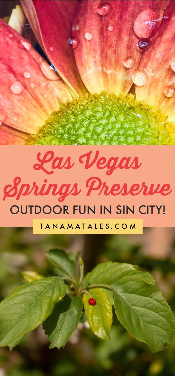 Tips for visiting Las Vegas Springs Preserve | Nevada | Las Vegas Strip | Downtown Las Vegas | Las Vegas Vacation | Las Vegas Aesthetic | Las Vegas Day Trips | Las Vegas Travel | Las Vegas Ideas | Visit Las Vegas | Las Vegas Hotels | Las Vegas Honeymoon | Las Vegas Travel Tips | Las Vegas Birthday