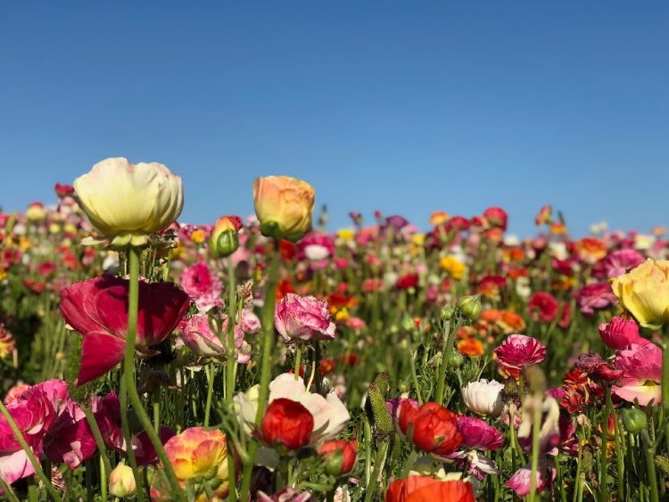 Flower FIleds