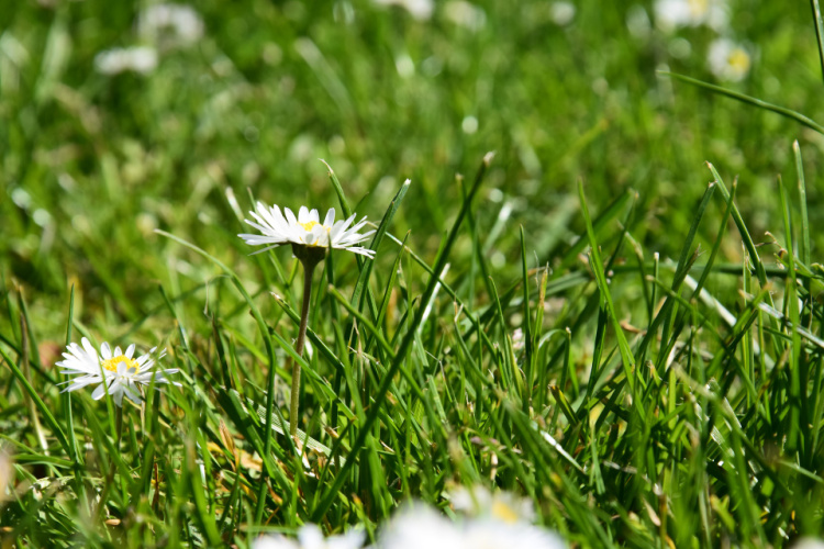 Dreams into reality, Grass and white flowers, Camping in Los Angeles County