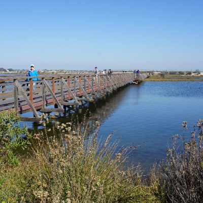 Bolsa Chica Ecological Reserve in Huntington Beach