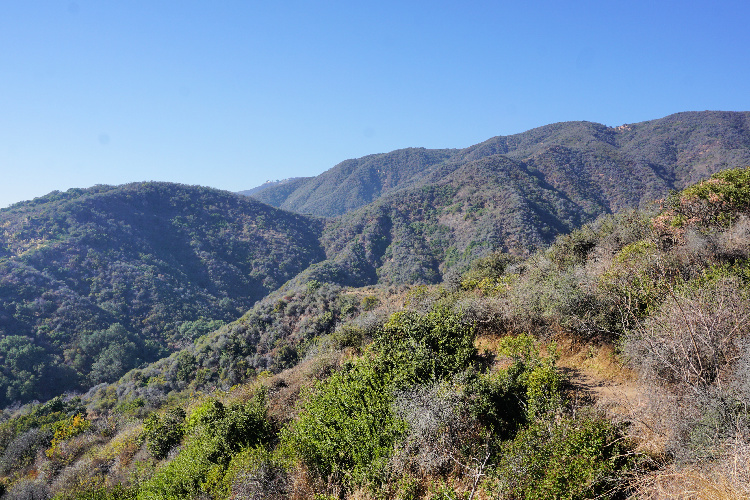 Los Liones Canyon, Easy Hikes in Los Angeles, California
