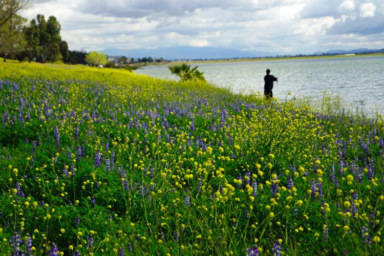 Flowers in Lake Elsinore