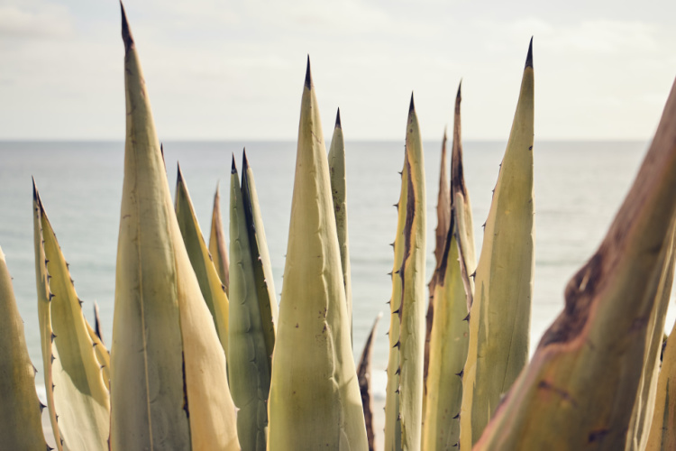 Plants in Laguna Beach